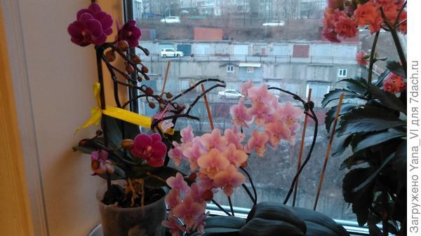 обе орхидеи