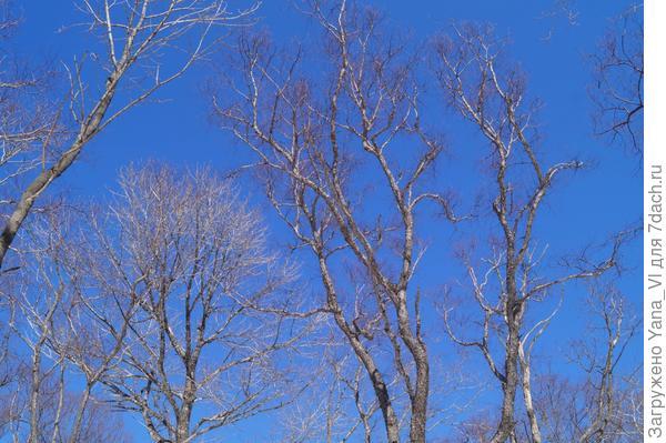 небо в лесу