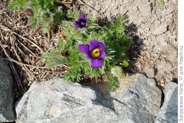 Успехов Вам, пусть выживут ваши растения :)