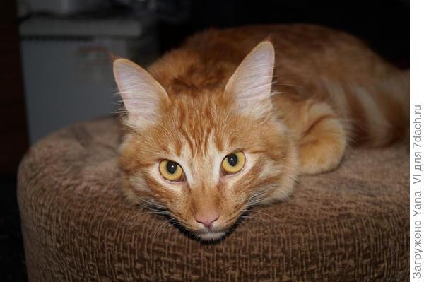 Мой рыжий котя