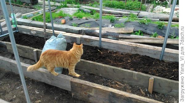 котя помогает
