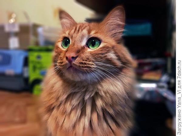 Мой бандит. Хотя здесь изображает приличного кота :)