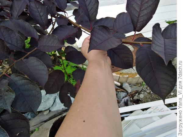 Листья поближе