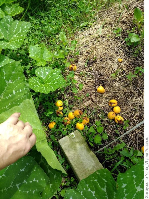 Плоды на земле