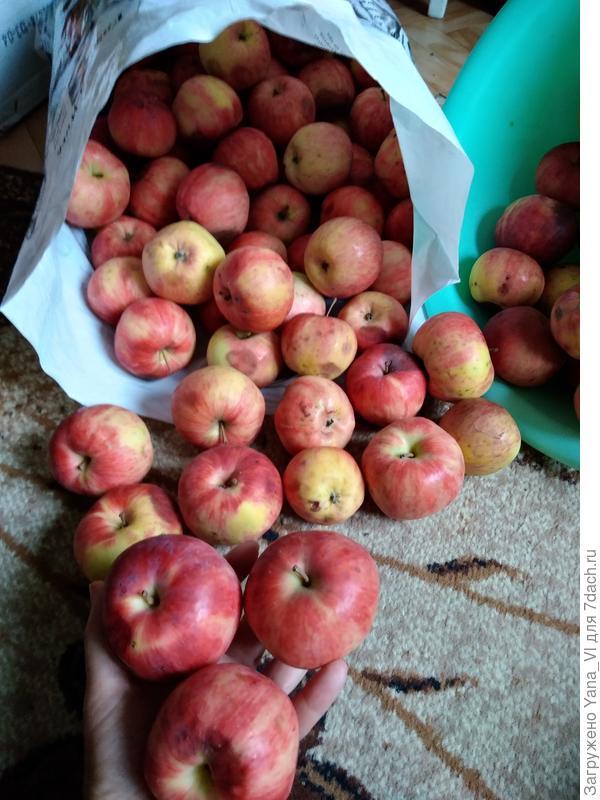 Мой персиково-яблочный август