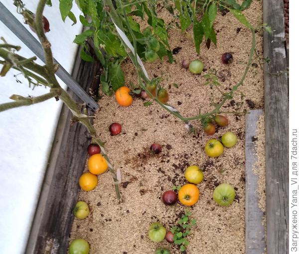 сброшенные плоды