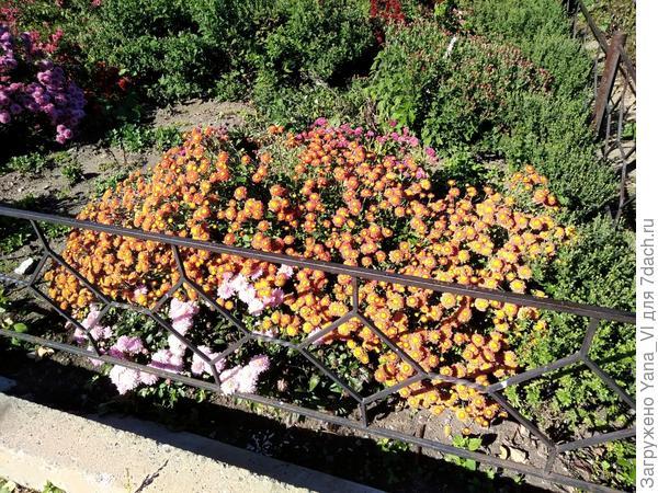 роскошное цветение осени