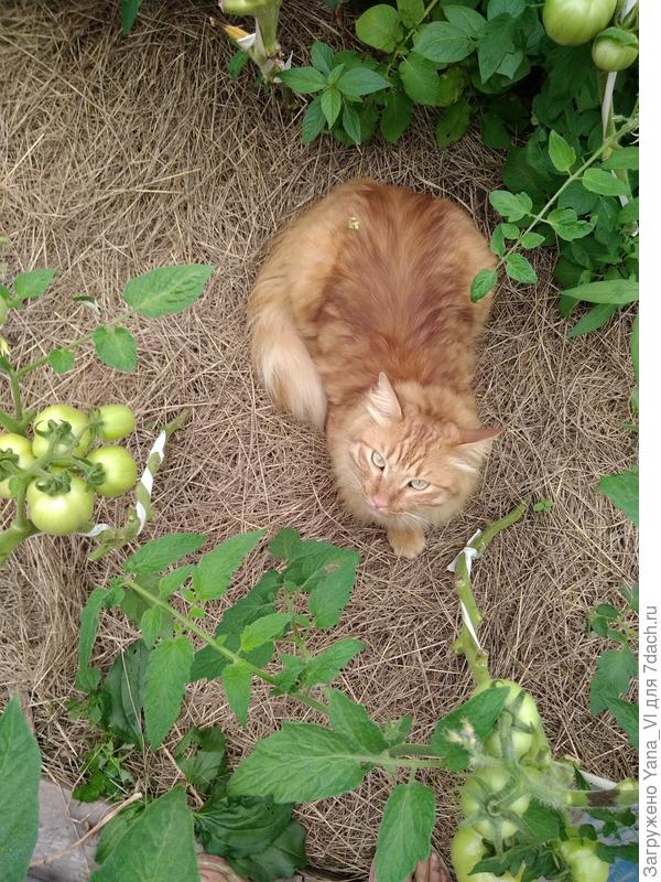 Лежит в засаде :)