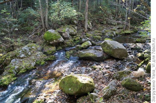 ручей течёт с горы вниз, к подножию, так что идя вдоль него вроде как не заблудишься...