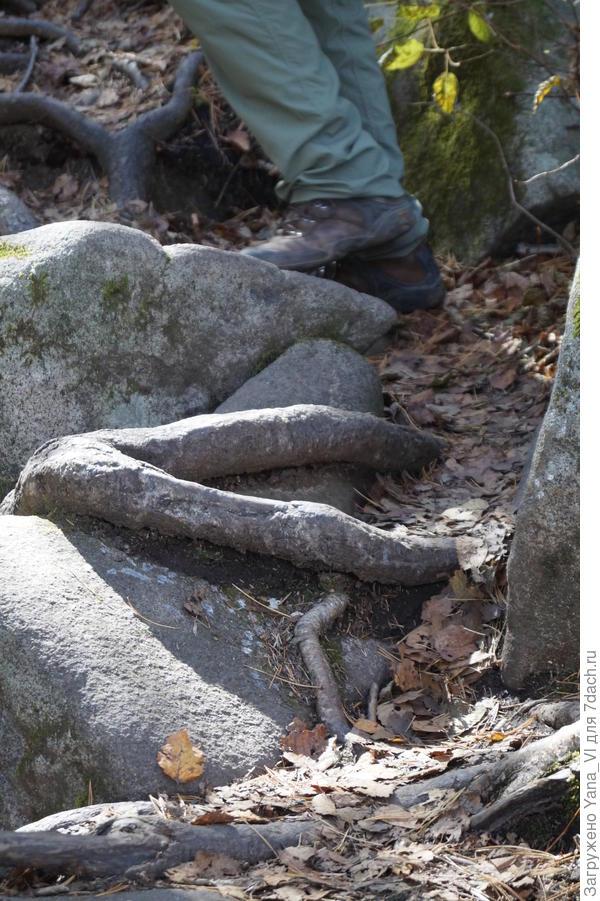 Камень как будто держит лапа какого-то чудовища...