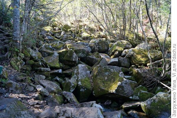 А ручей всё таки исчез совсем, под вот этим завалом из камней.