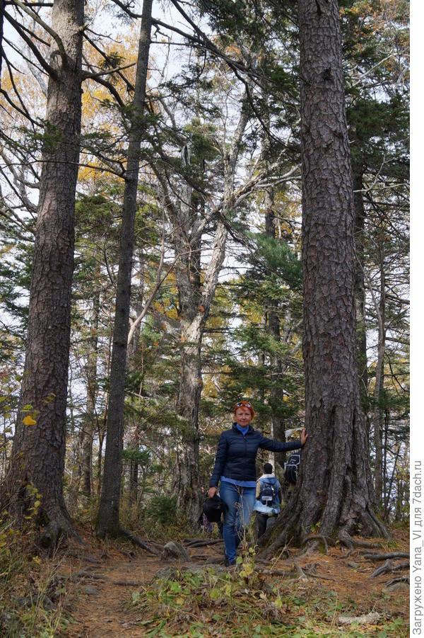 Лесные исполины уже кажутся родными :)