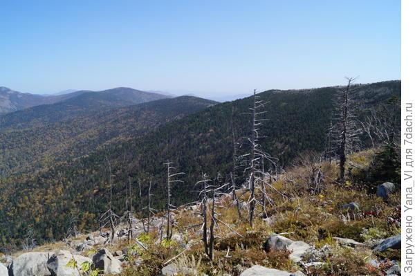 От больших деревьев остались только скелеты