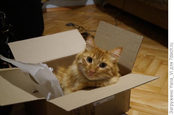 Уже упаковался...  Сам.