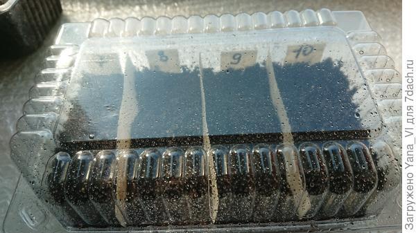 контейнер с грунтом и гранулами закрыт и помещён на подоконник.