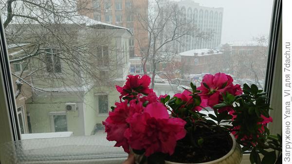 С наступлением дня снег разошёлся