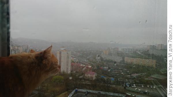 Котя смотрит в окно