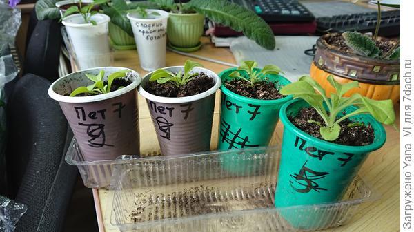 Растения 11 апреля