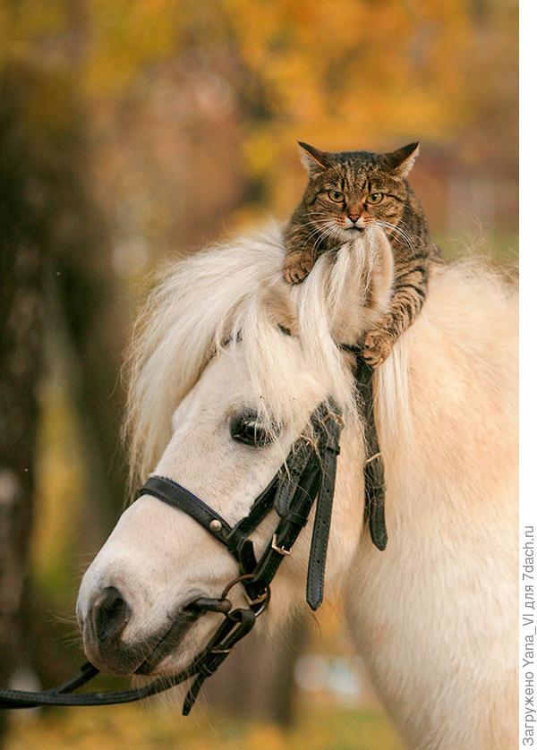 Лошадка с котиком