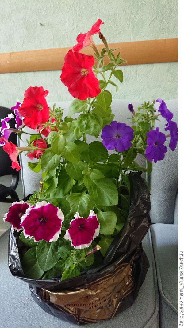 Переросшие растения подготовлены к поездке за город