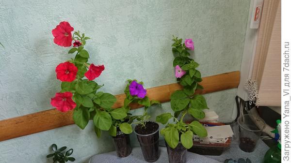 Василиса Премудрая слева
