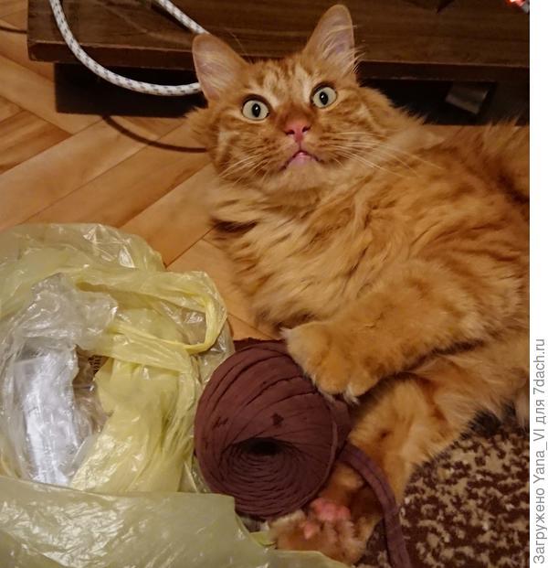 Даже котя удивился :)