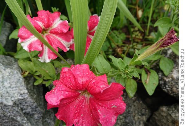 Цветы в каплях дождя
