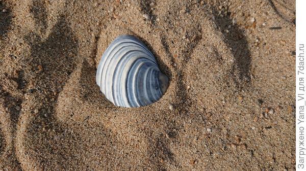 Яркое пятно на песке