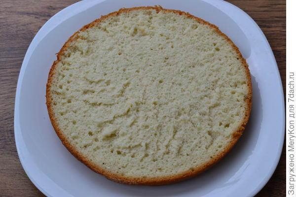 бисквит в разрезе