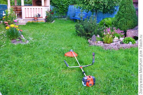 газон перед покосом