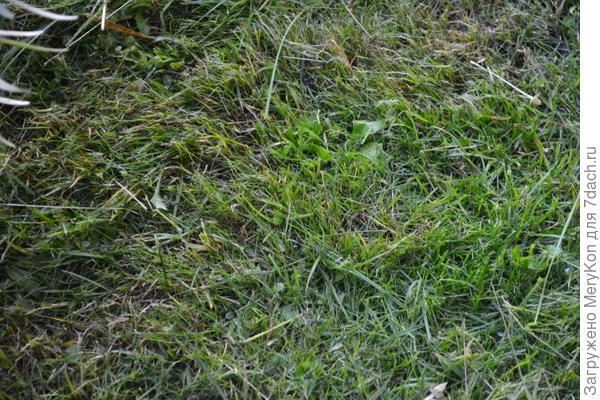 Мягкую траву закрутила