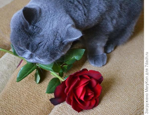 Заглаживаем вину - цветок в зубах несем):)