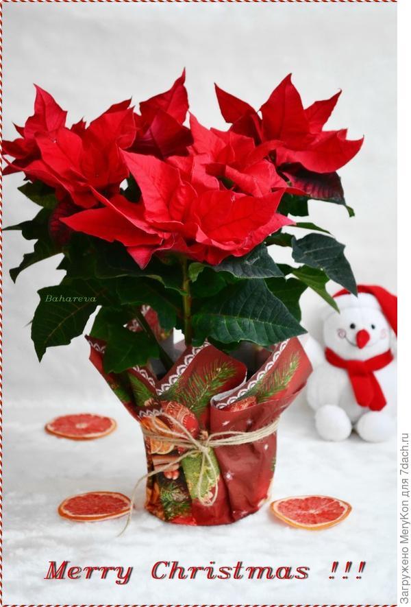 Всем празднующим счастливого Рождества!!!