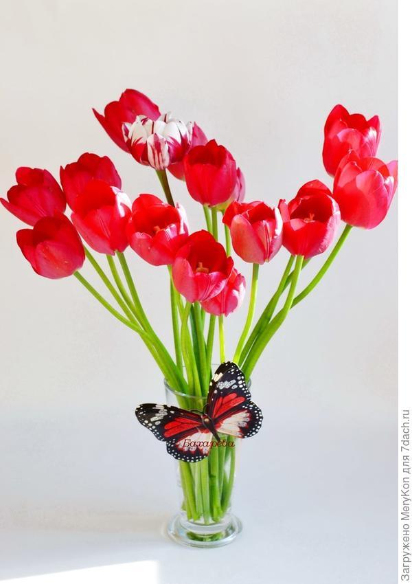 А какая ж весна без тюльпанов?!:)