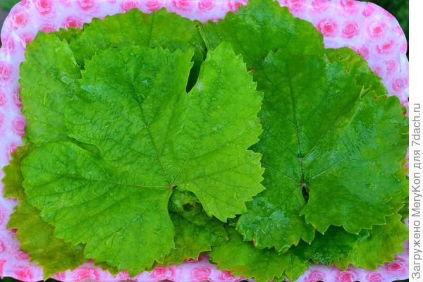 Маринованные огурцы в виноградных листьях. Пошаговый рецепт с фото