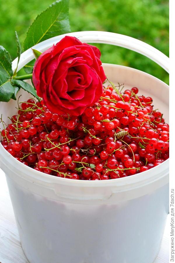 Варенье из красной смородины с персиком и грецким орехом. Пошаговый рецепт с фото
