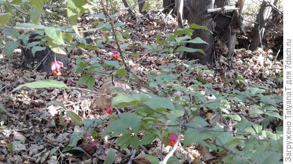 кустик с красивыми ягодками