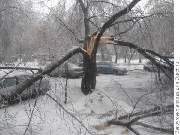Сломанное дерево прямо у окна