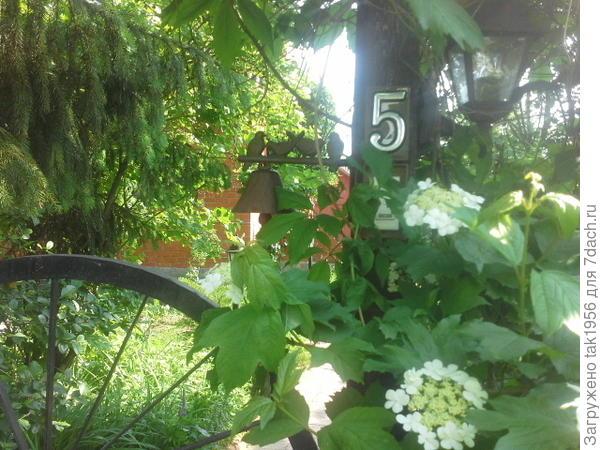 Калина цветёт.