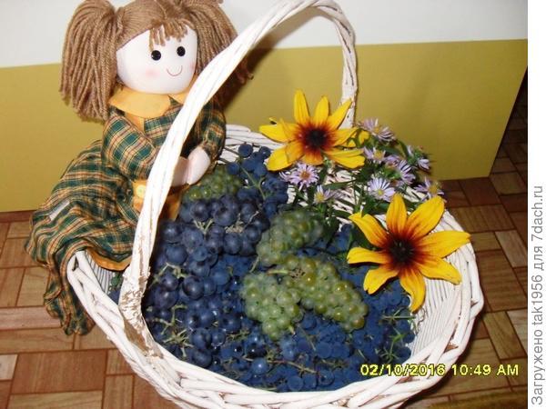 последний виноград