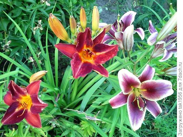с восточными лилиями