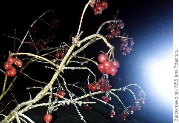 Рубиновые - бусы - женский оберег, или Калина в моём саду