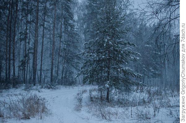 лес возле дачи