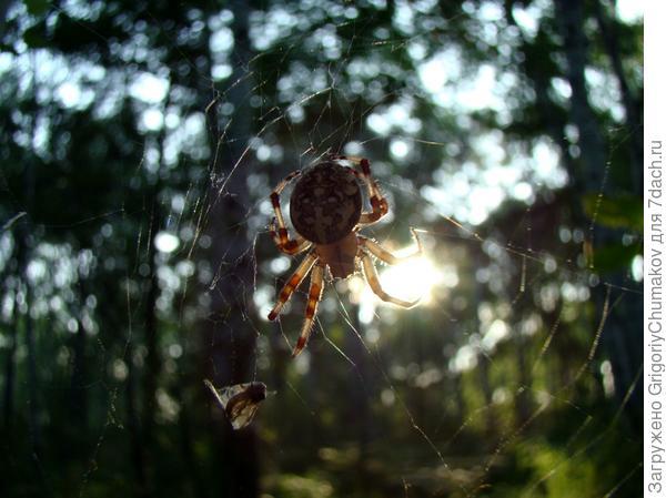 паук захватил солнце