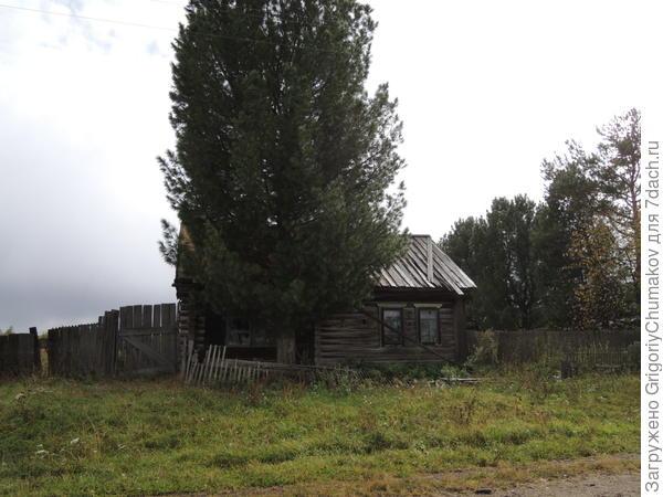 дом с кедром