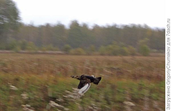 птица с поля