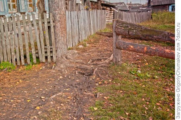 корни держащие берег и дом