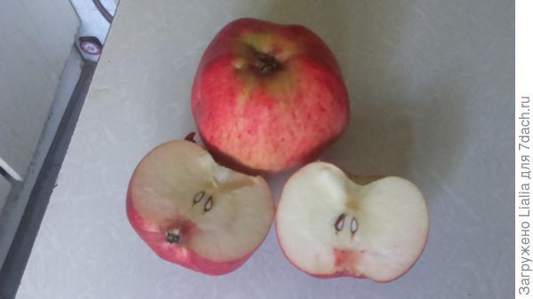 яблоко на срезе