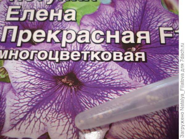 Семена Елена Прекрасная