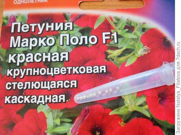 семена Марко Поло (красная)